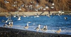 Travel Blog Reviews Private Tour Planning Hidaka, Hokkaido Photography Tips Sharing