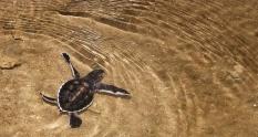 Borneo Ecotourism Libaran Turtle Sanctuary