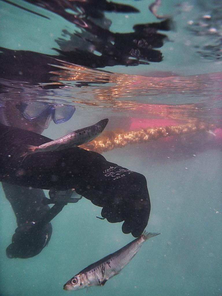 Swim with Tuna at Victor Harbour, South Australia Jensen Chua Jetblogger