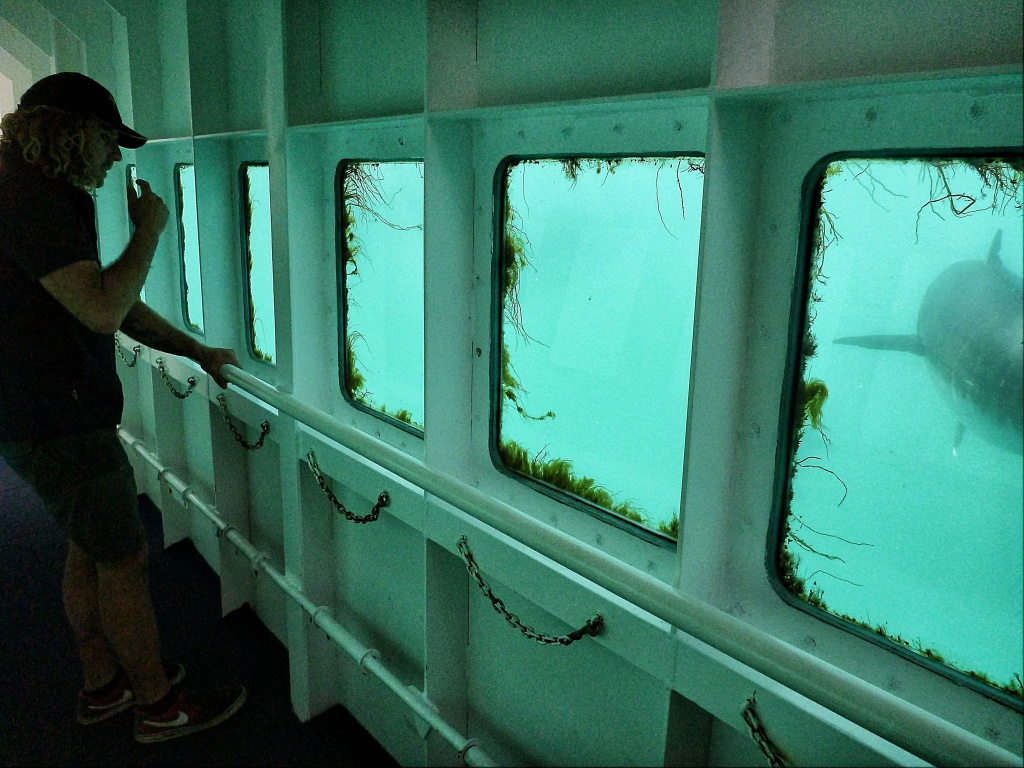 Swim with Tuna at Victor Harbour South Australia Jensen Chua Jetblogger