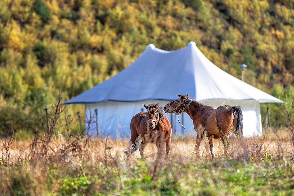 The Hidden Valley Resort – Shangri-La (Yunnan) Best Kept Secret