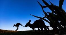 Travel Australia helps Recovery