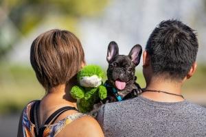 Animal Photography Pet Photoshoot Pet Photos Dog