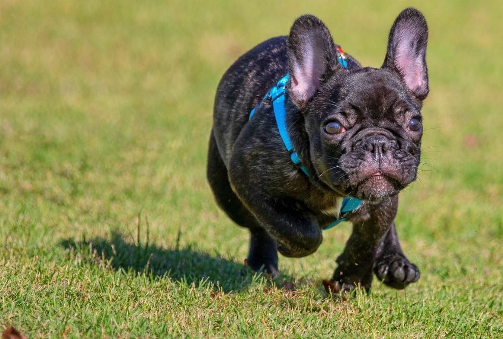 Animal Photography Pet Photoshoot Pet Dog Photography