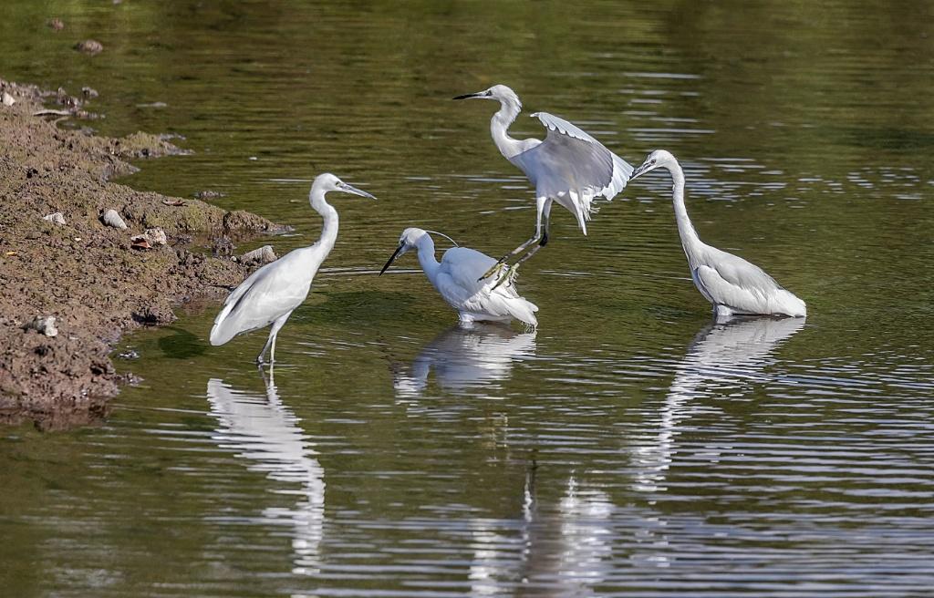 Sungei buloh wetlands reserve