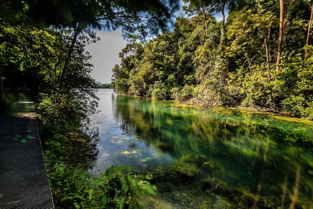MacRitchie Reservoir Prunus Trail